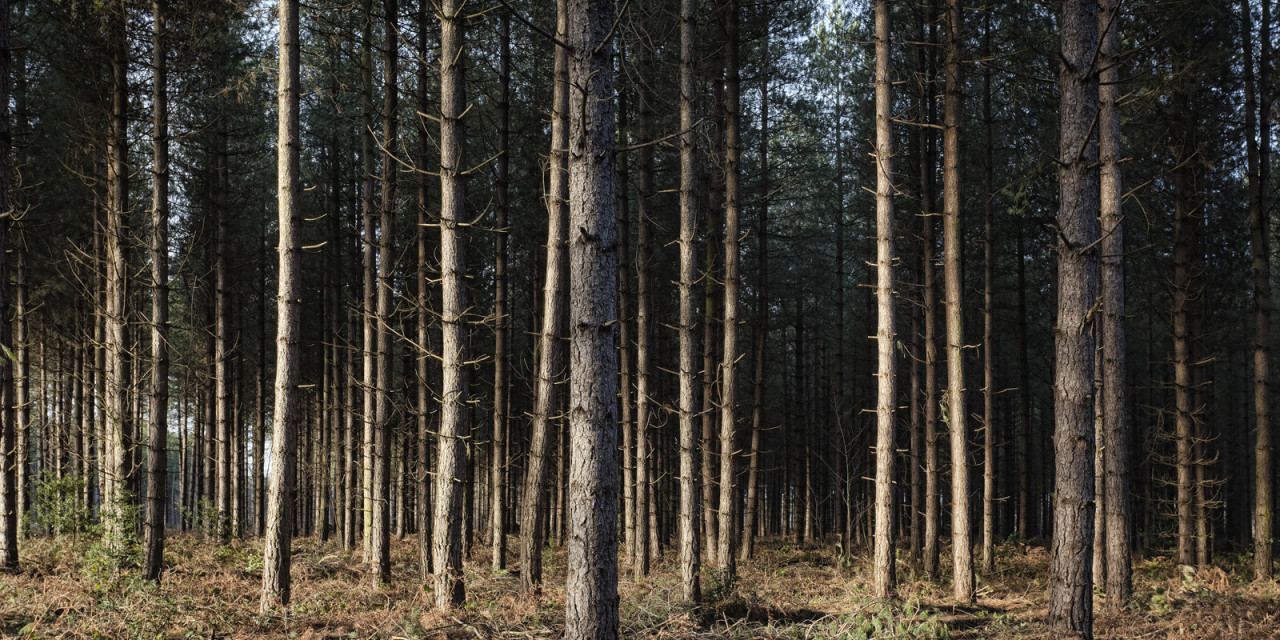 Lost in a Landscape: Horsford Forest