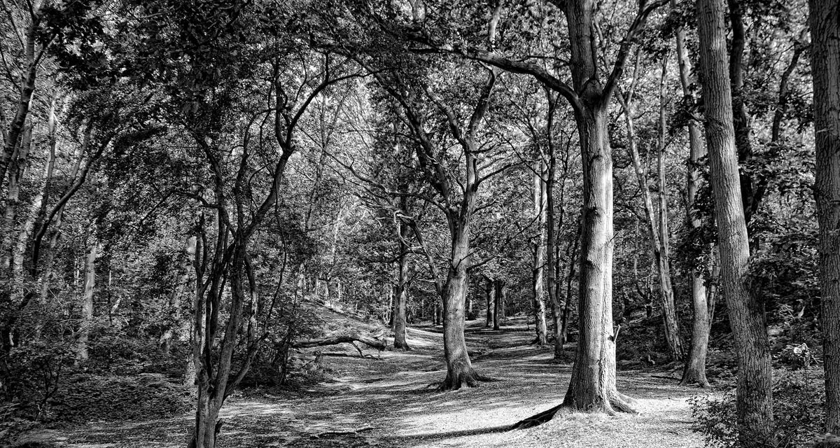 Lost in a Landscape: The Vinegar Pond, Mousehold Heath, Norwich