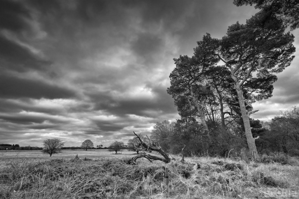 East_Wretham 7637 © Nick Stone 2015