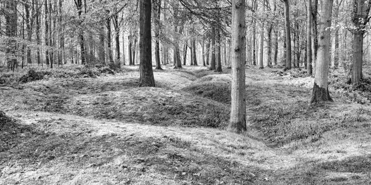 Vanishing Point: Devil's Wood