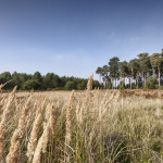 Lost in a Landscape: Weeting pathways