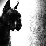 Black Dog tales: The Hound of St Austell