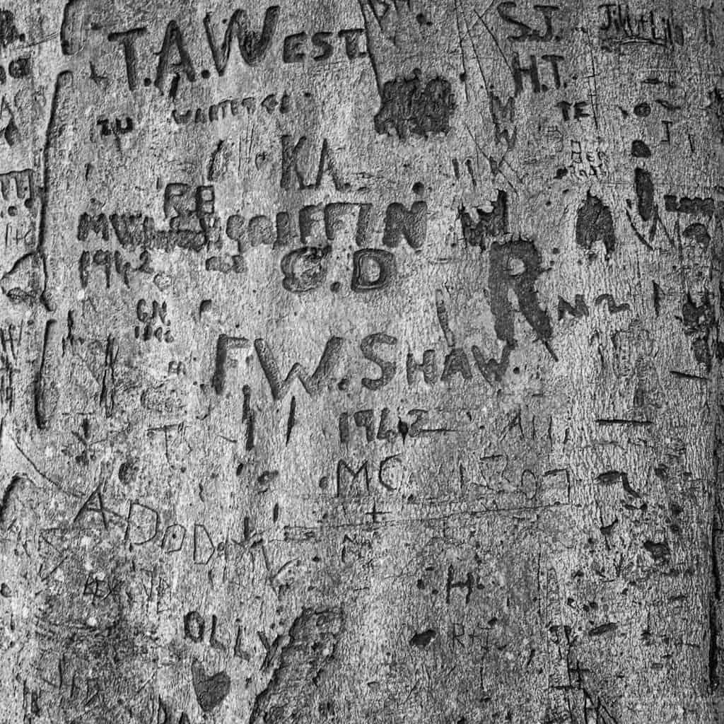 Blickling Arborglyphs