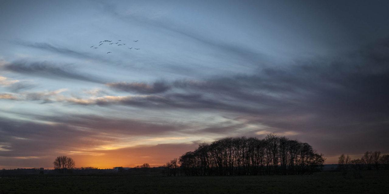 Lost in a Landscape: Buckenham Carr