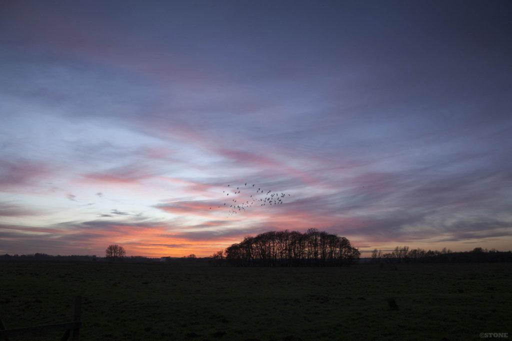 Buckenham Marshes