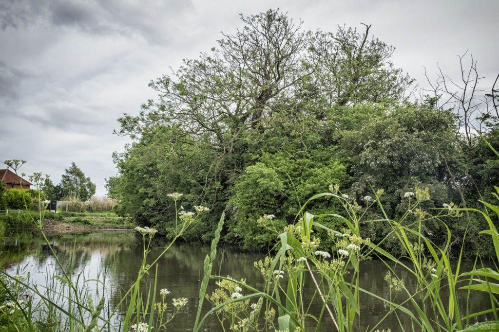 Edingthorpe village pond