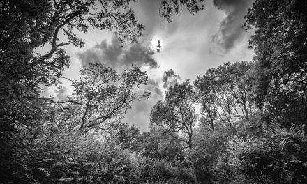 Lost in a Landscape: Wayland Wood