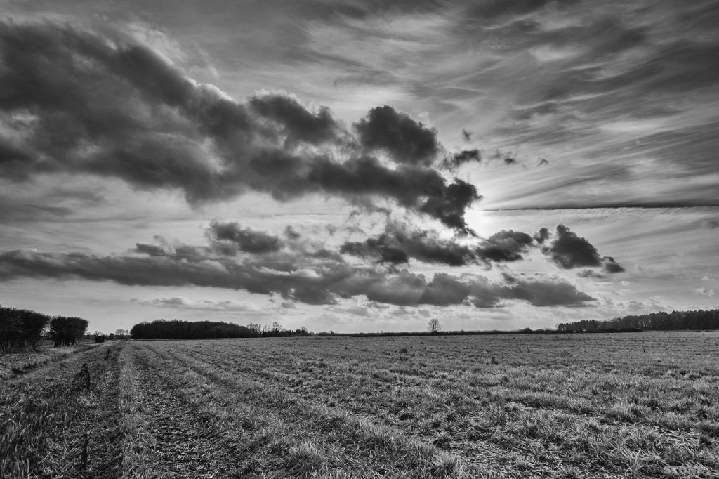Scottow Norfolk Landscape