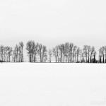 Lost in a Landscape: Little Hautbois