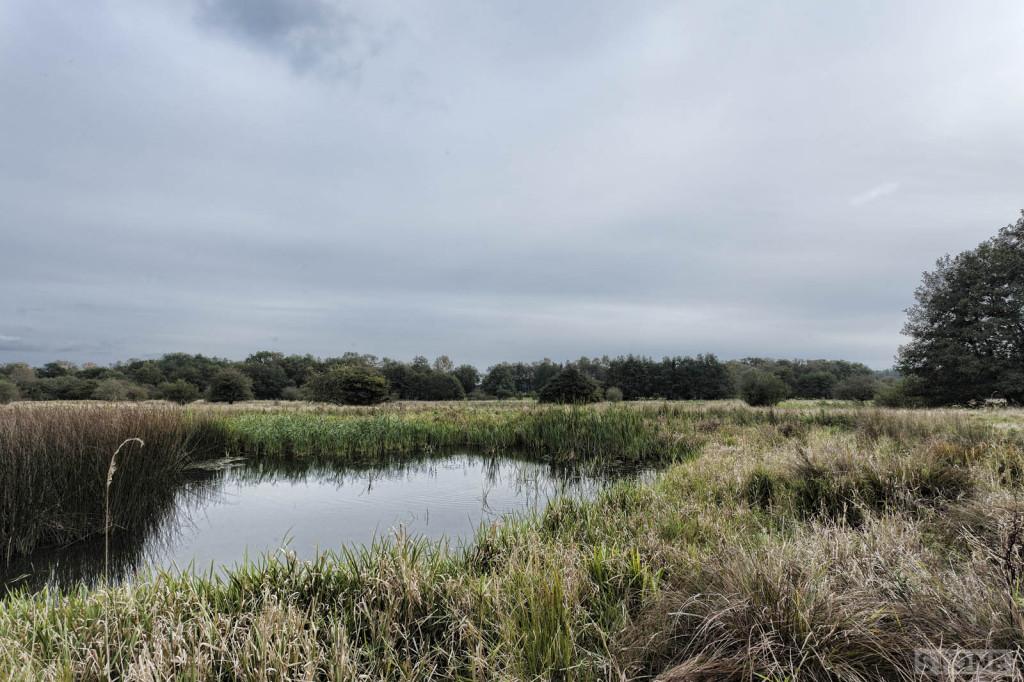 pingos Norfolk © Nick Stone 2014 6963
