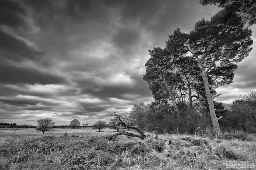 East_Wretham 7637 © Nick Stone 2015