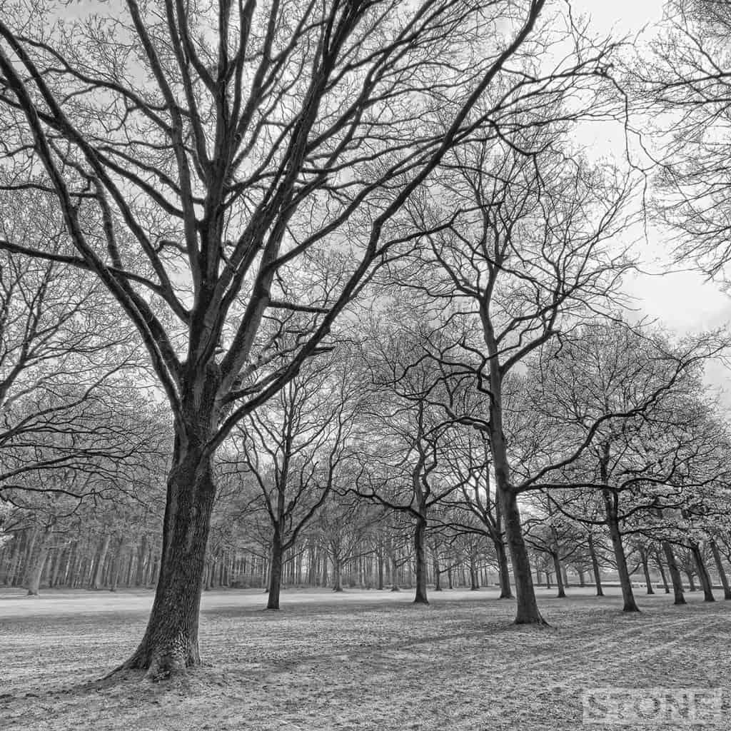 delville avenue © Nick Stone