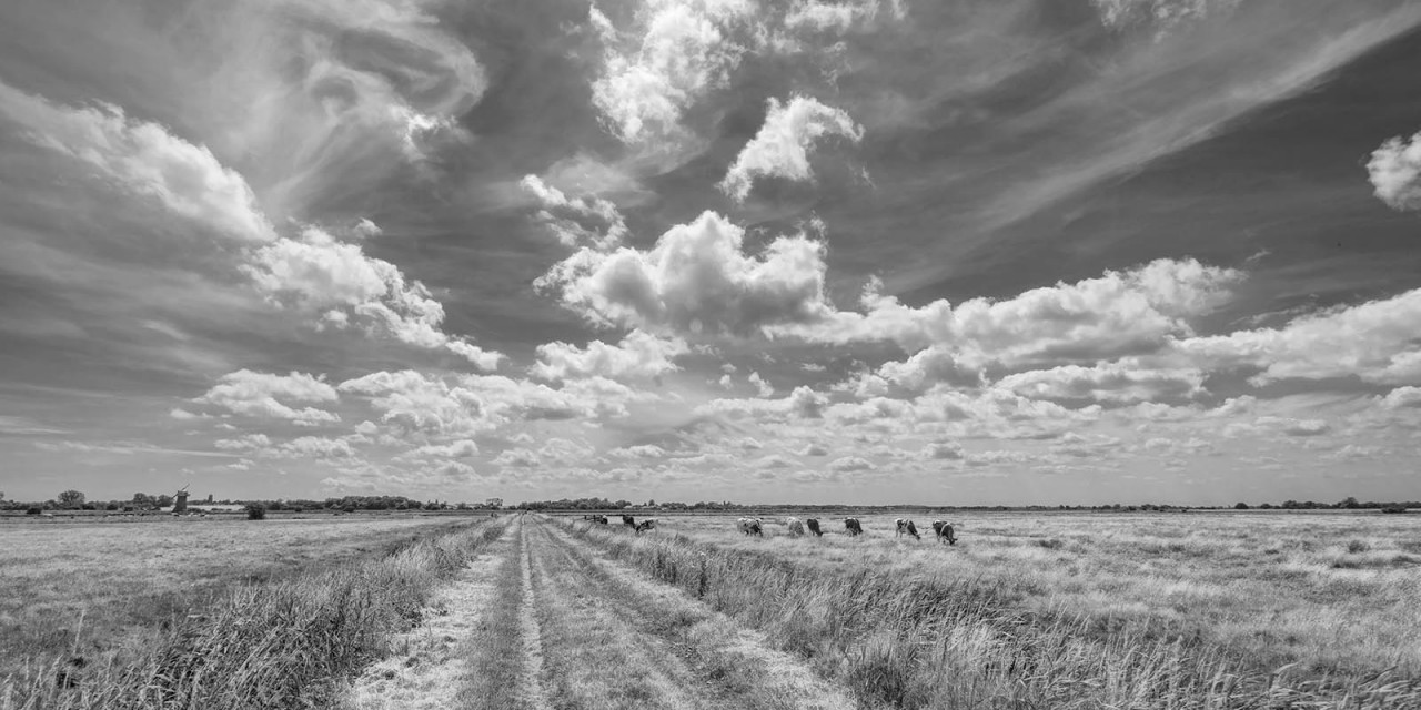 Lost in a Landscape: Heigham Holmes