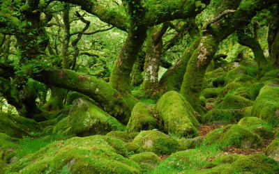 Black Dogs: The Wisht Hunt of Dartmoor