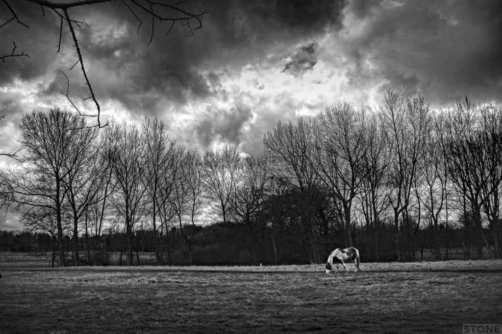 Hautbois_IMG_6282_©_Nick_Stone