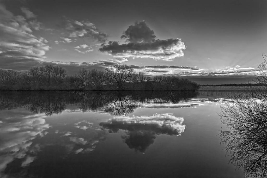 Strumpshaw fen 8370 © Nick Stone