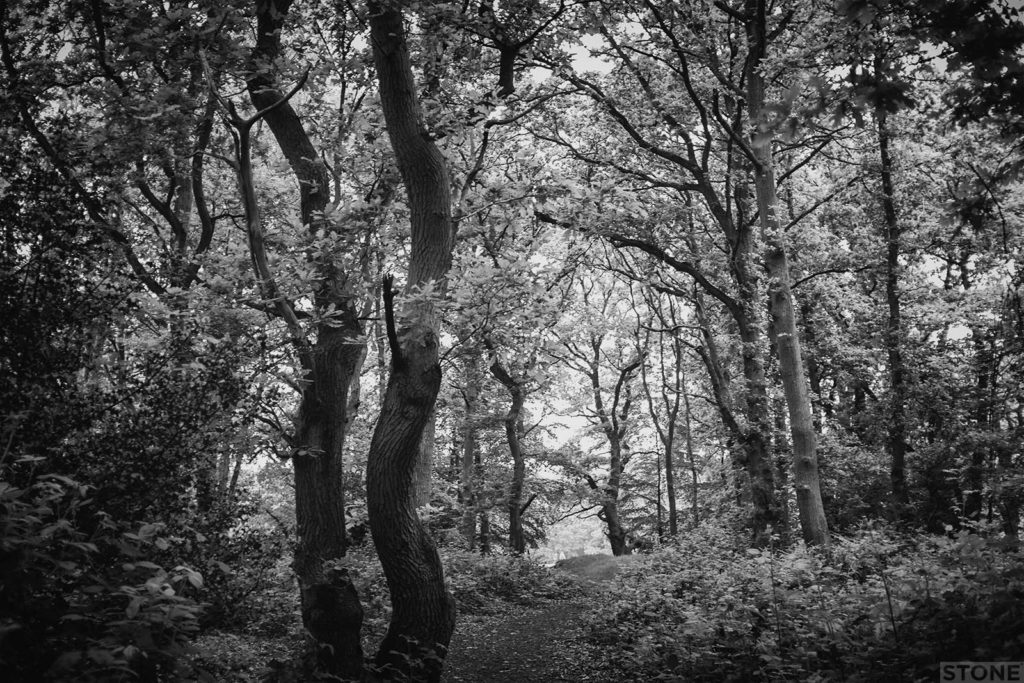 Mousehold 2719 © NS 2016 william of Norwich