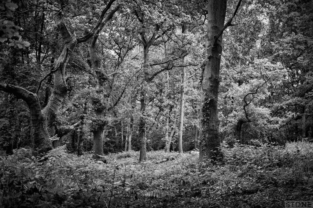 Mousehold 2726 © NS 2016 William of Norwich