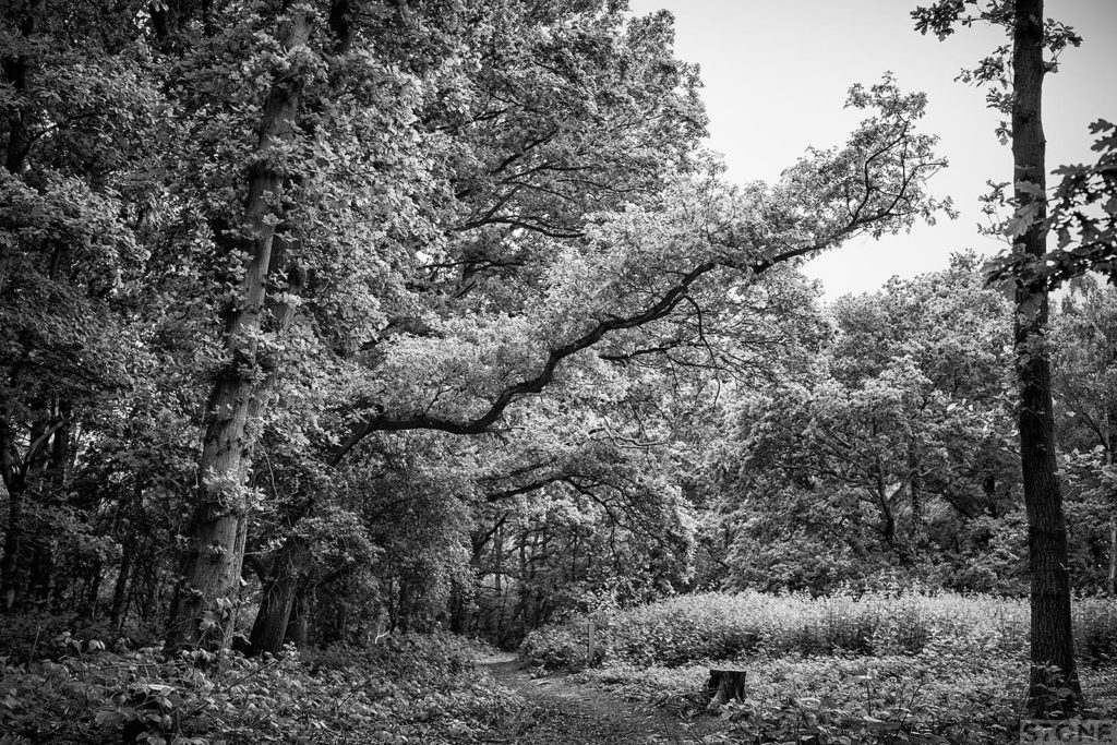 Mousehold 2731© NS 2016 - William of Norwich