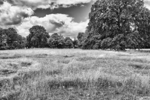 Greenwich burial mounds