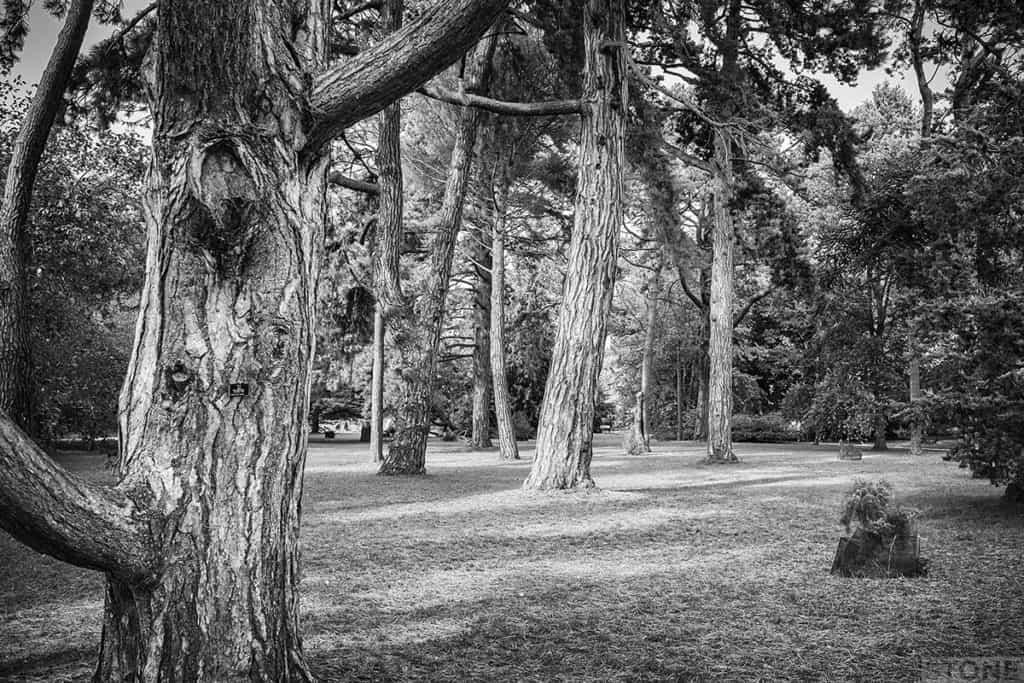 cambridge_botanic_gardens_dscf3402