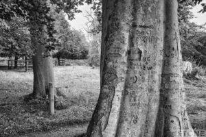 Arborglyphs blickling