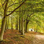Lost in a Landscape – Blickling Arborglyphs