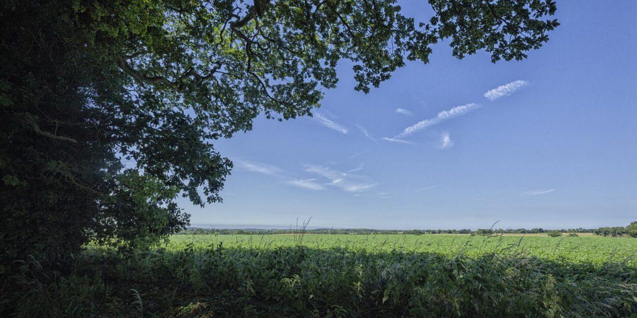Lost in a Landscape: Rich pickings – Swafield