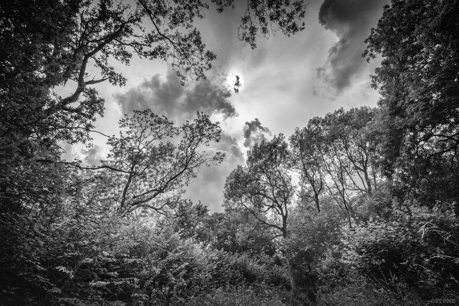 Lost in a Landscape: Wayland Wood